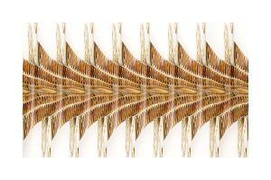 Neu Naturalis - Nautilus - 3_4